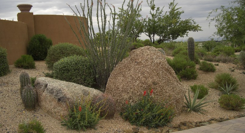 Beginer Easy Arizona Backyard Landscaping Pictures 80u0026#39;s Outfits