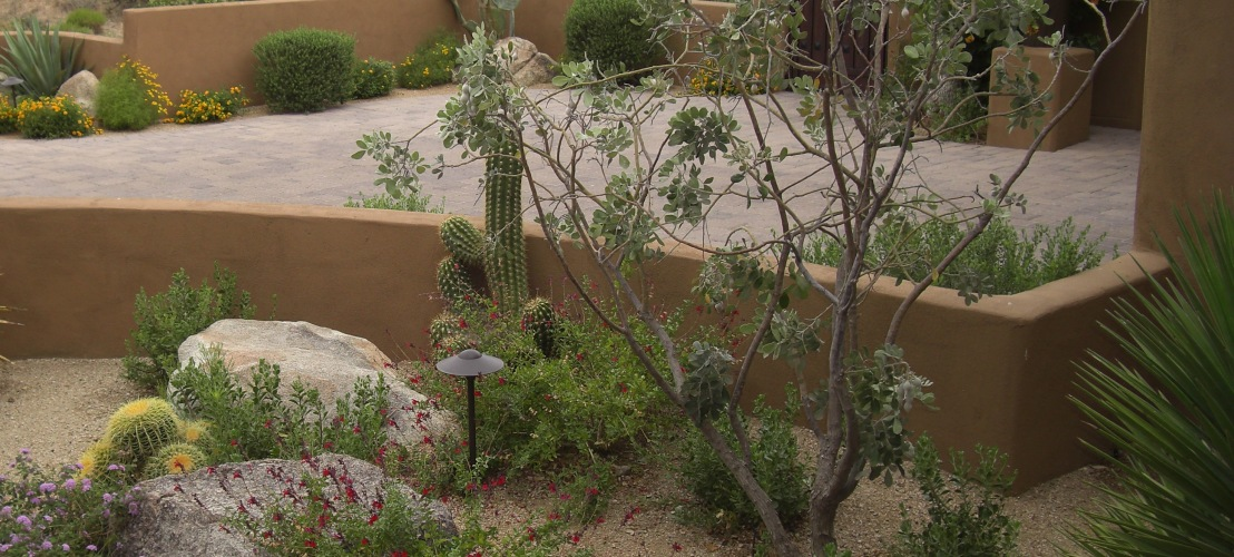 FAQ: Plants & Hardscapes
