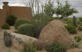 Surround your desert home with Phoenix or Scottsdale xeriscaping landscaping beauty by Desert Crest.