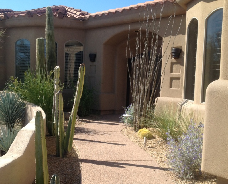 A lovely garden courtyard, Phoenix landscaping that's drought tolerant, low maintenance and beautiful.