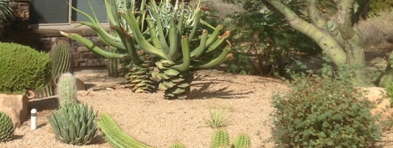 The Xeriscaping Fallacy