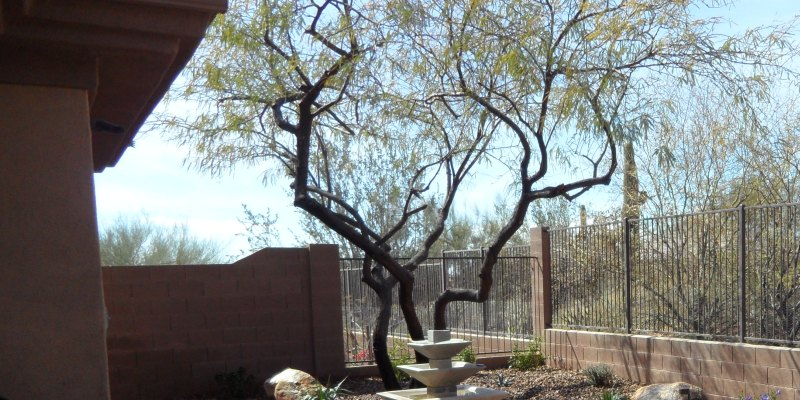 Sonoran Natives: Most Winter Hardy Plants for Phoenix Landscaping
